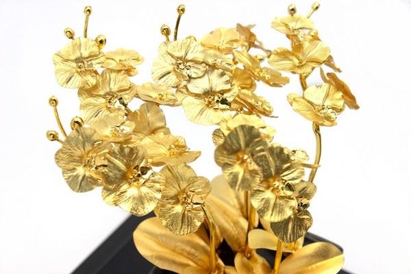 Lan phú quý mạ vàng mang vẻ đẹp sang trọng