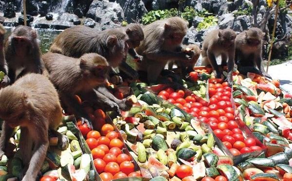 Du lịch Vịnh Nha Phu - Đảo Khỉ