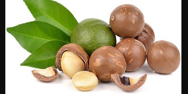 nguồn gốc hạt macca là yếu tố ảnh hưởng đến giá bán