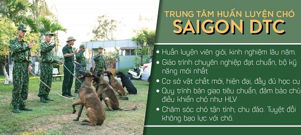 Cách huấn luyện chó Golden tại trung tâm huấn luyện chó Sài Gòn DTC
